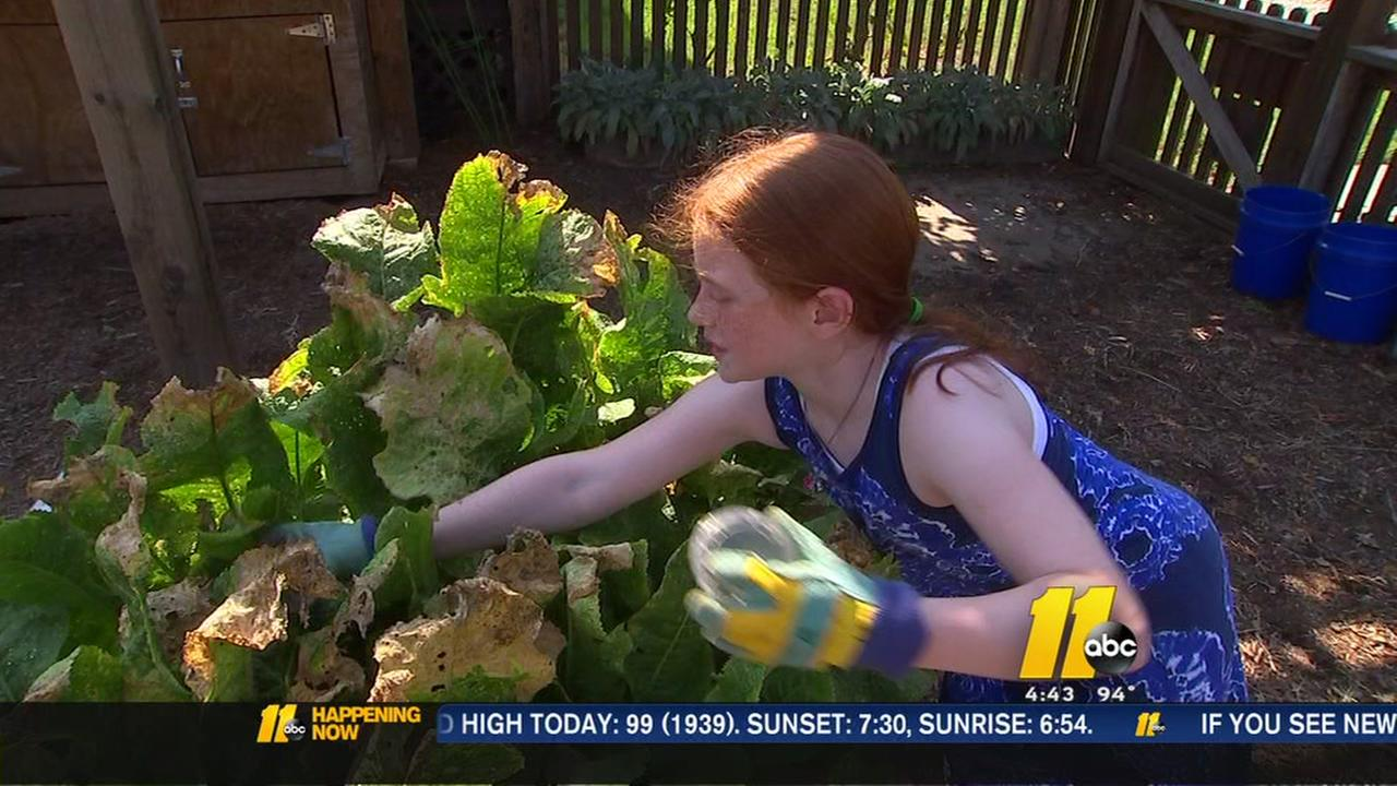 Student community garden gives back