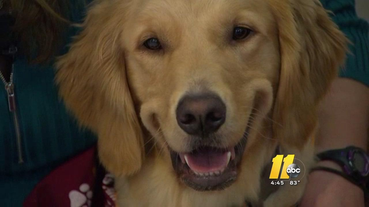 Local dog participates in national cancer study