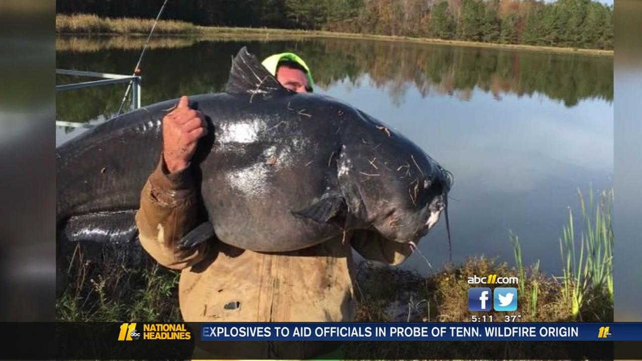Man catches gigantic catfish