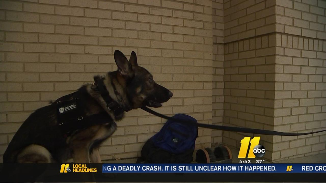 Private K-9 security on the rise