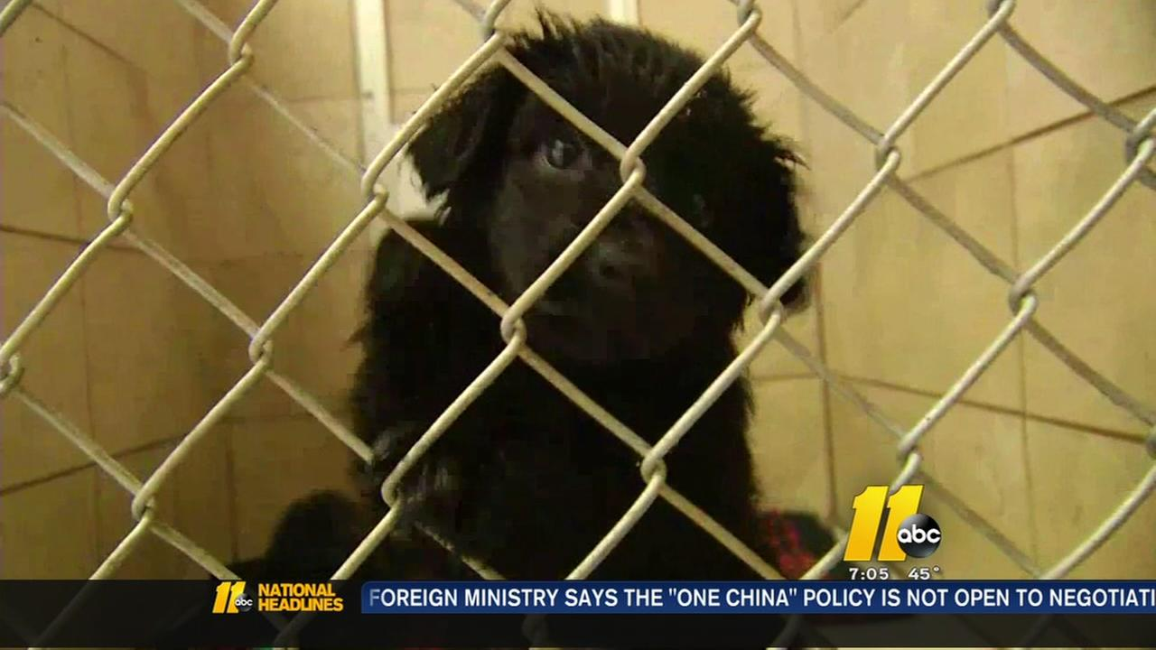 Dogs Rescued From Hoarder In Western North Carolina Up For Adoption