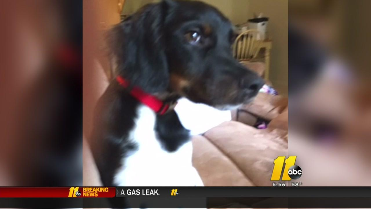 Frantic search for missing service dog