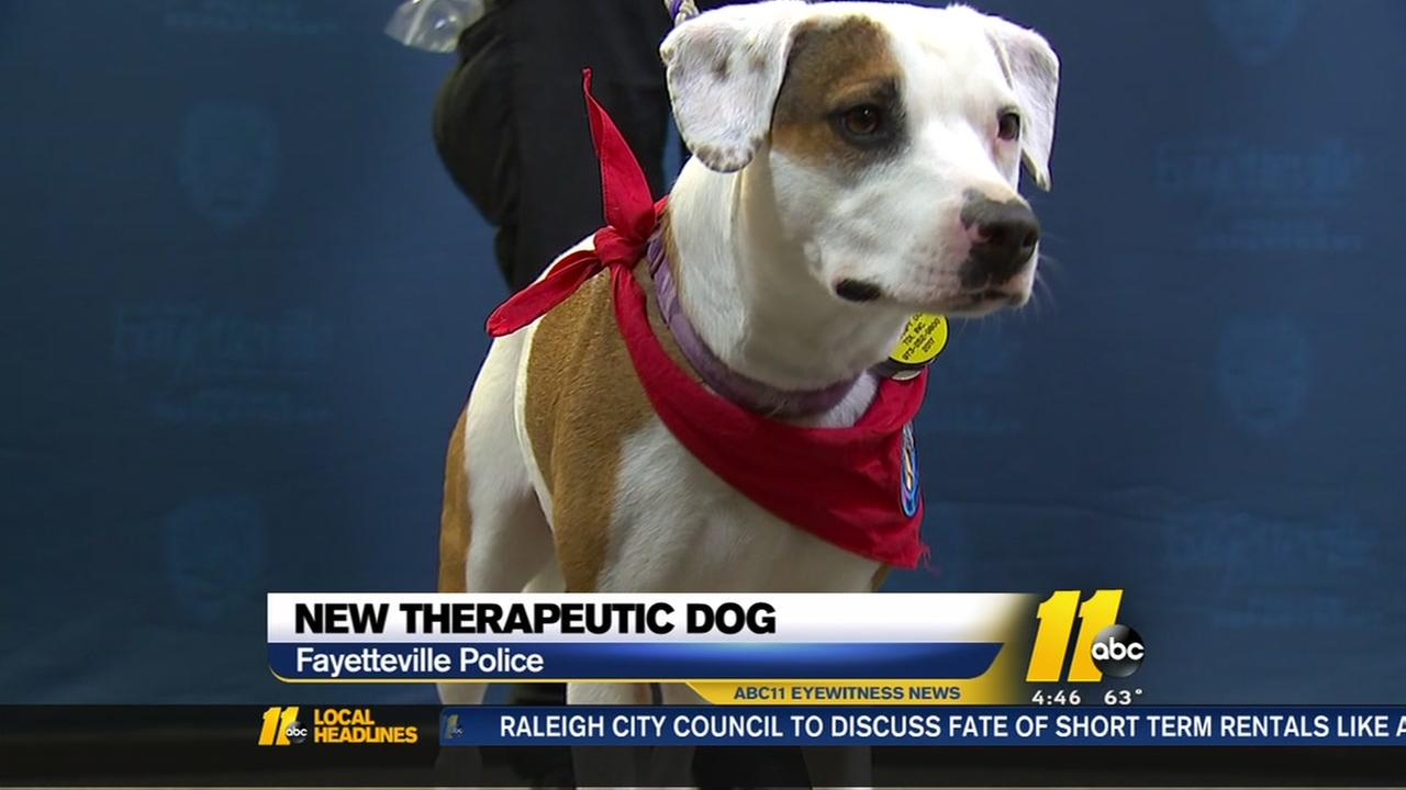 Fayetteville PD introduces new therapy dog