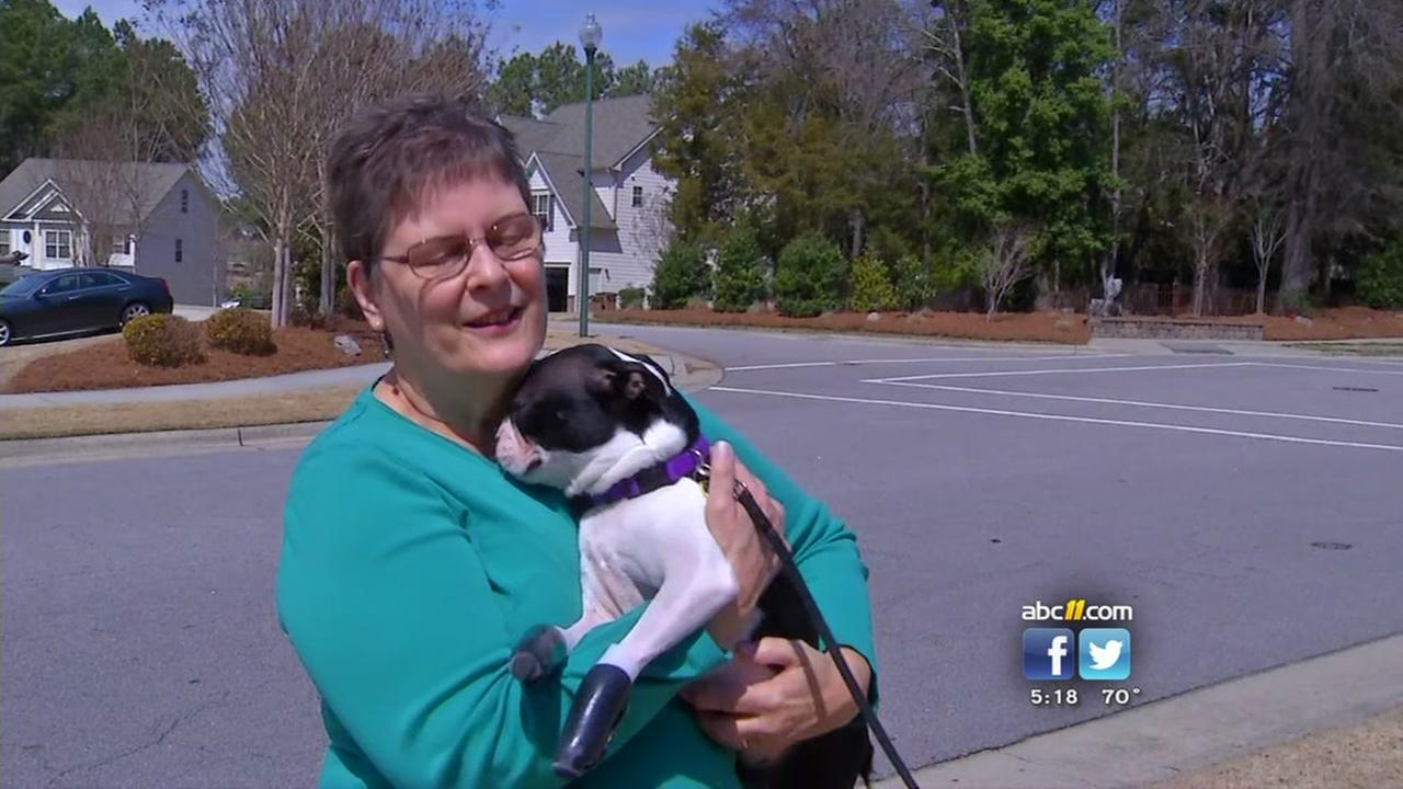 Puppy gets new prosthetic paws