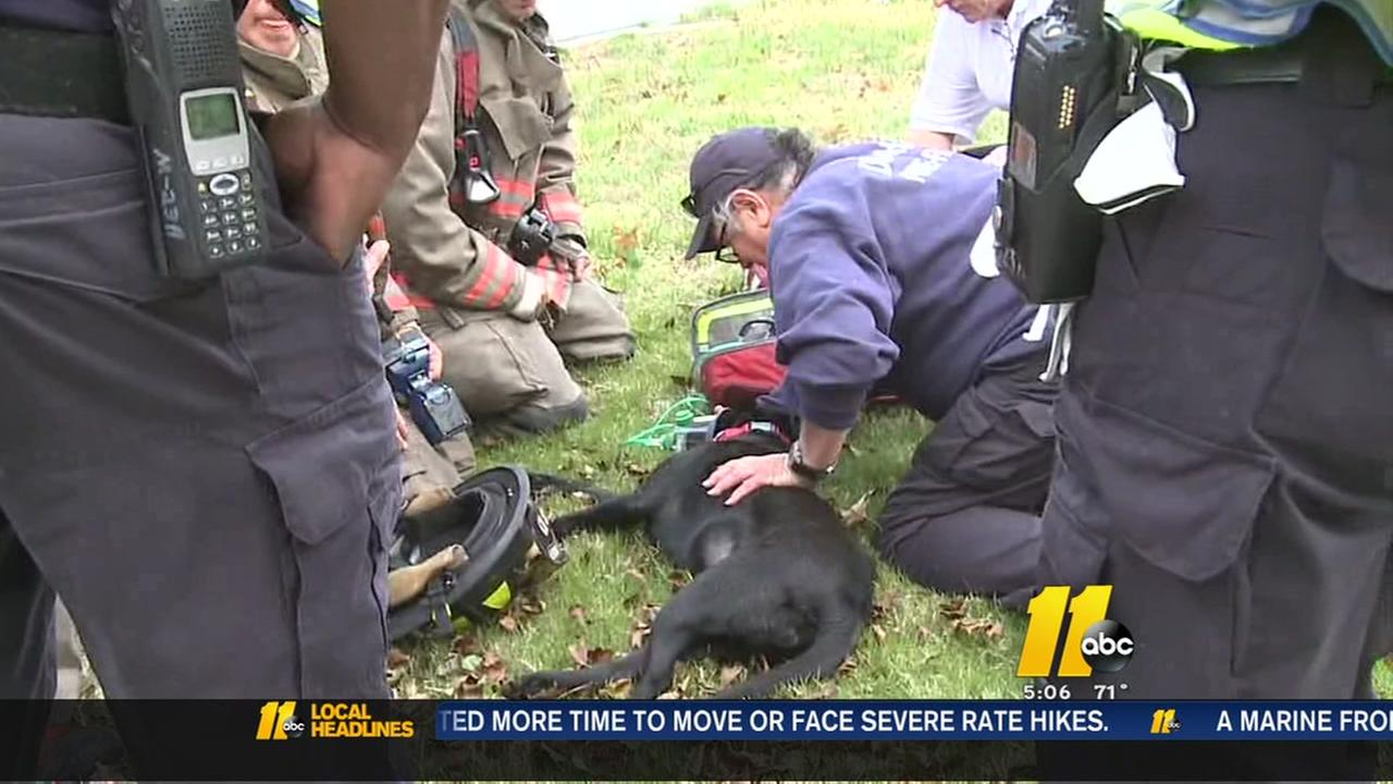 Firefighters rescue dog from burning house