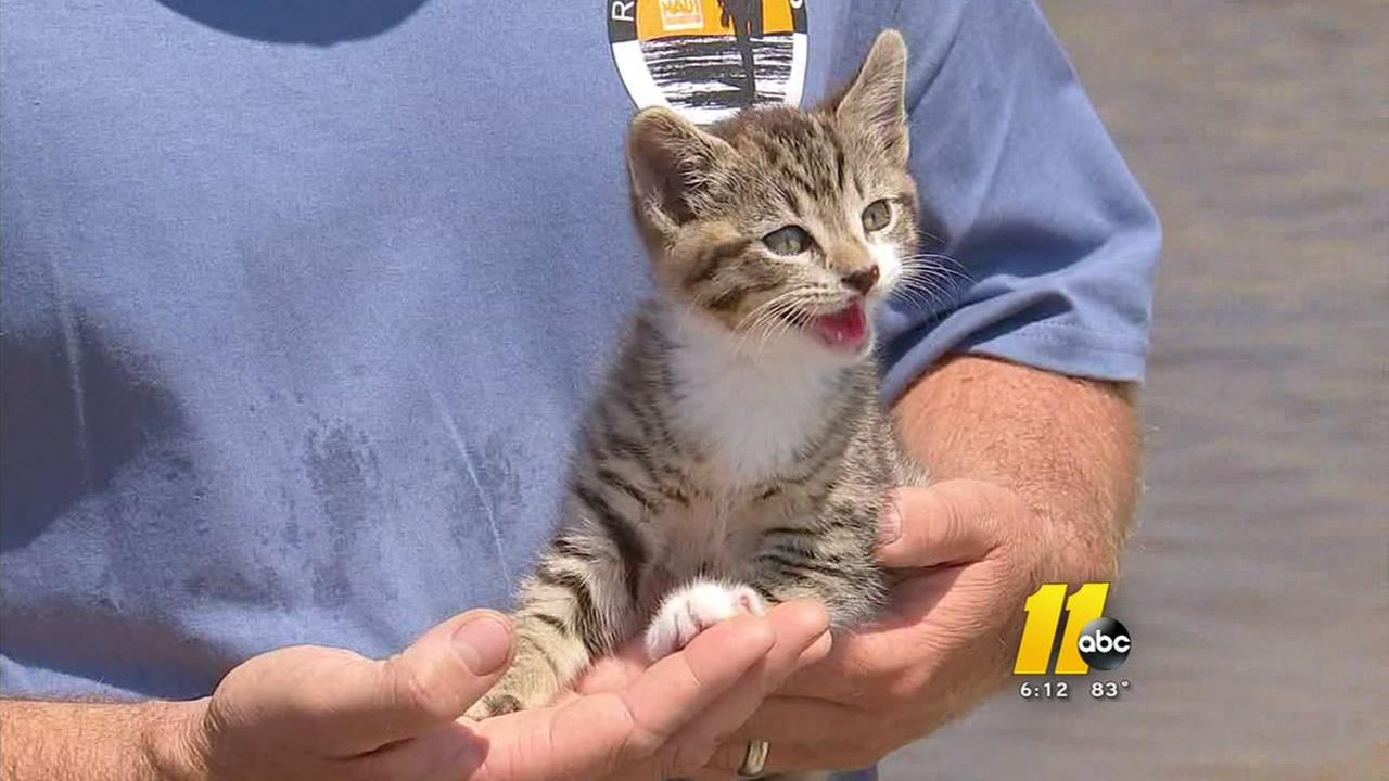 DOT workers rescue cat flung from NC bridge