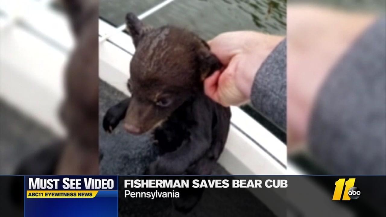 Fisherman saves bear cub