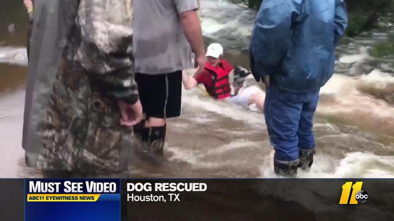 Dog rescued from flood waters