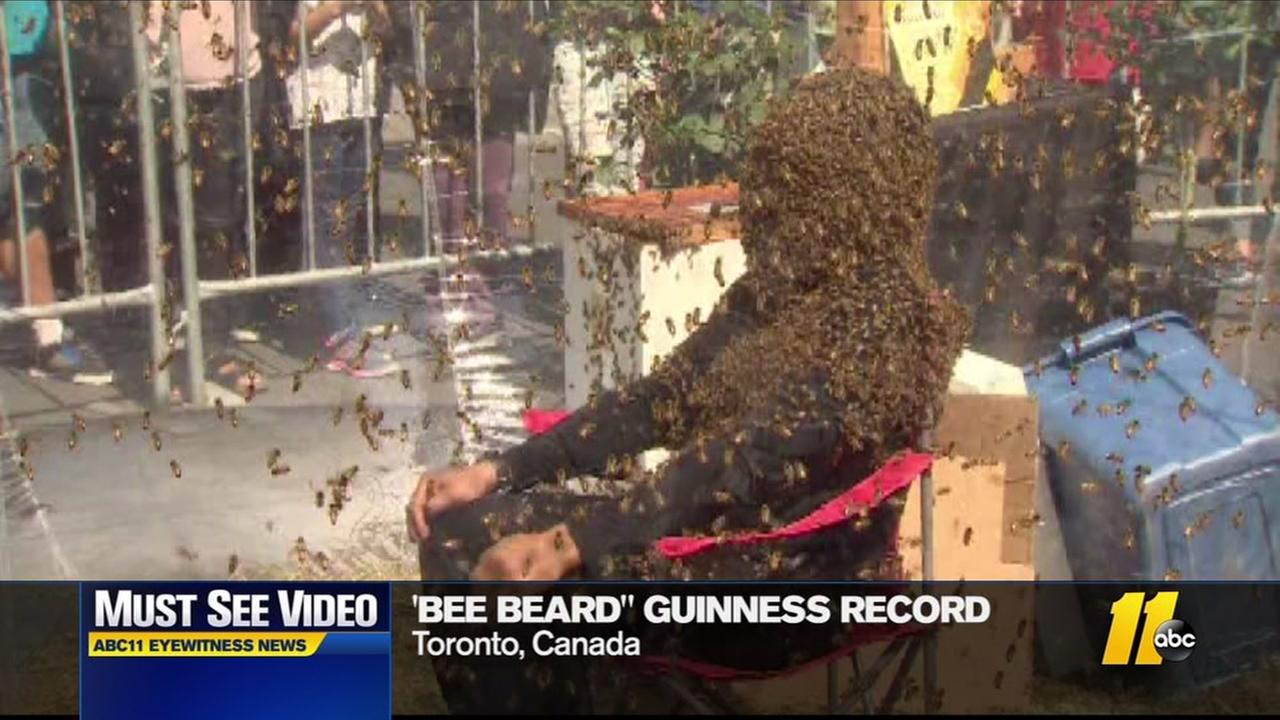 New bee beard world record