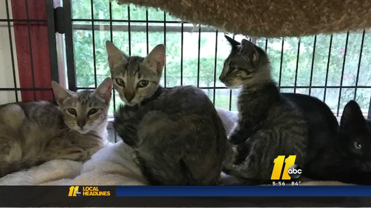Purr Partners helping animals affected by Harvey
