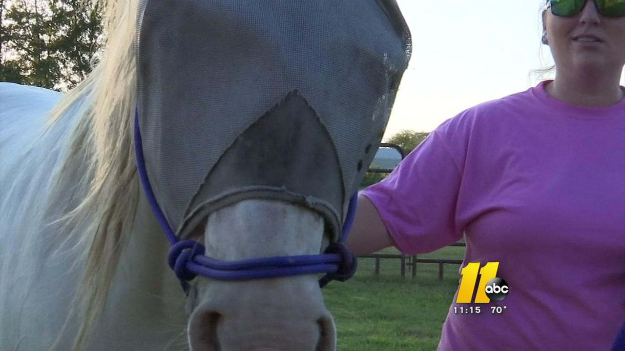 Haley the horse recovering from years of neglect