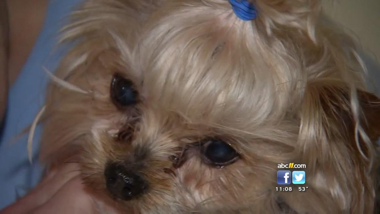 One of two stolen Durham dogs recovered