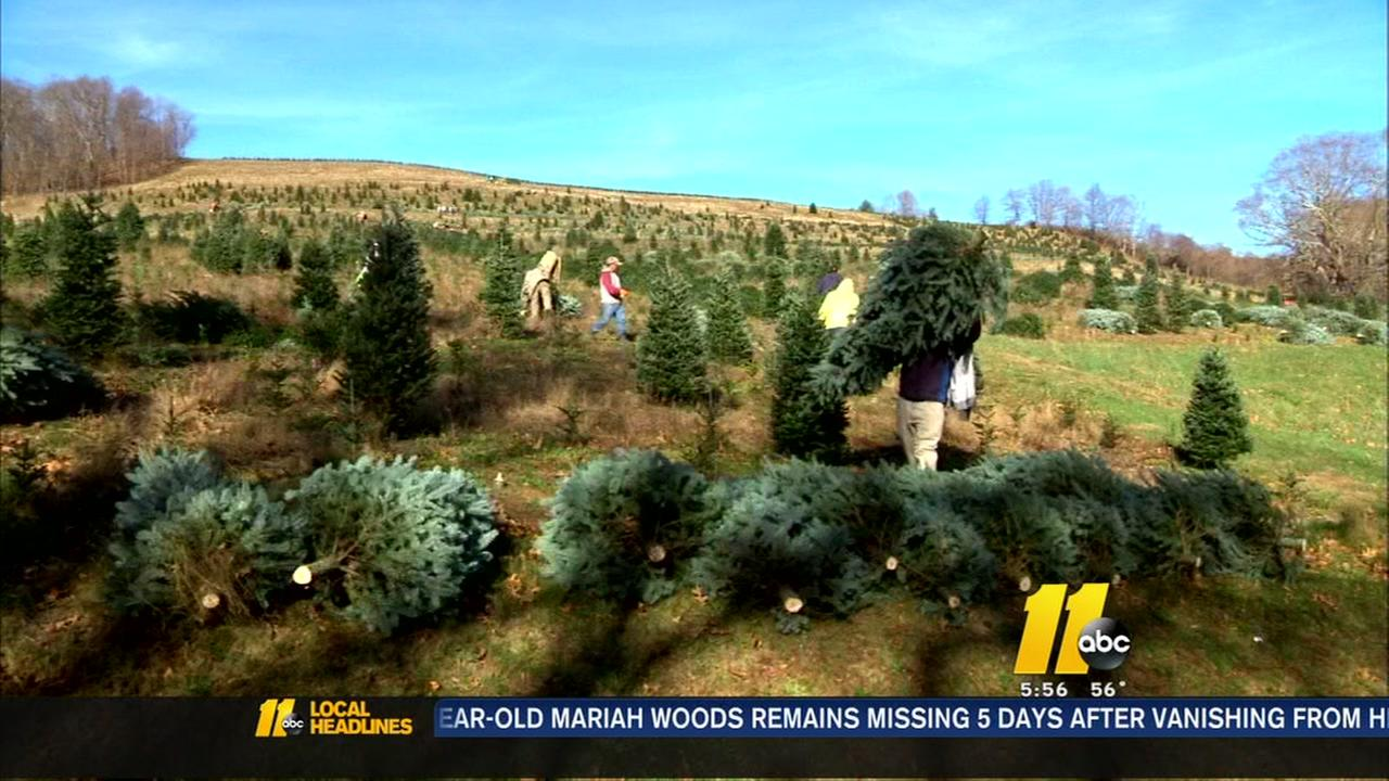 From Avery County, one special tree is on its way to Raleigh