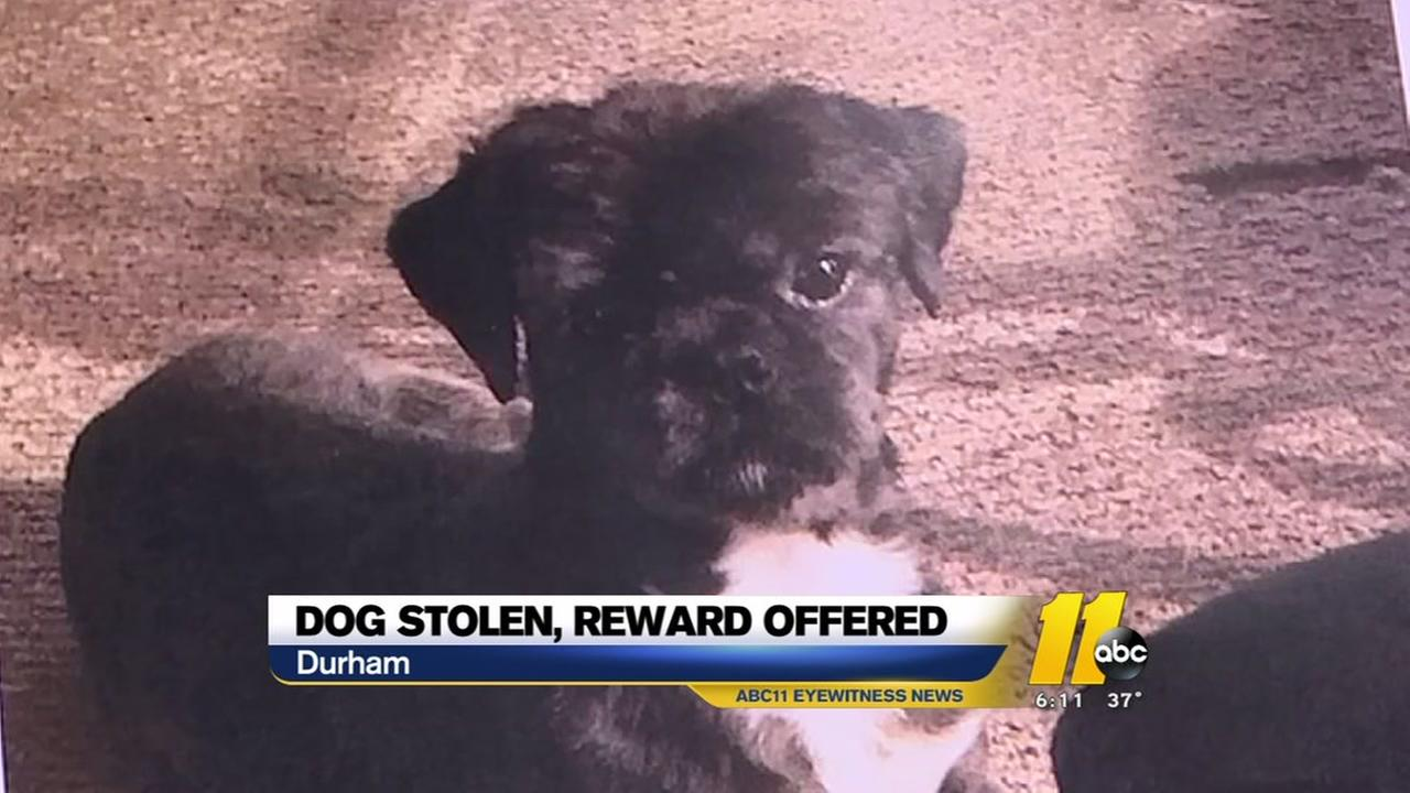 Durham woman searching for stolen dog