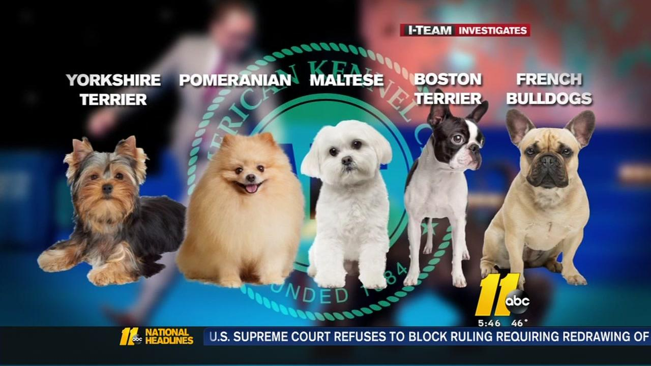 Dog thefts are on the rise