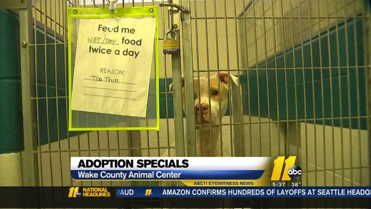 Wake County Animal Shelter holds Valentines Day adoption special