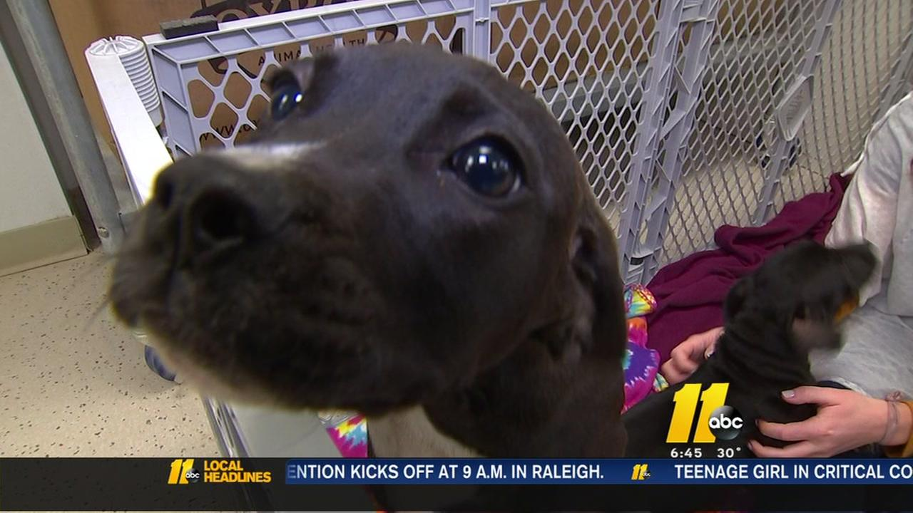 Heres how you can help an area pup in need