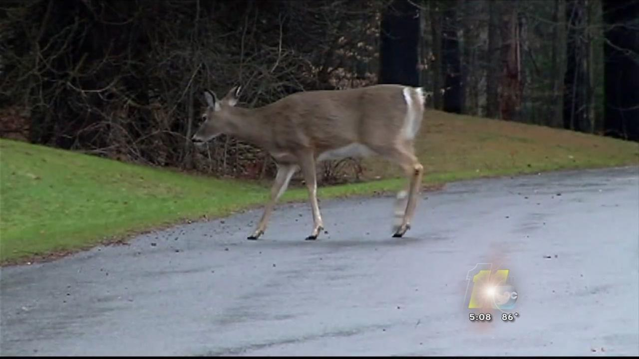 Deer Confiscated in Raleigh
