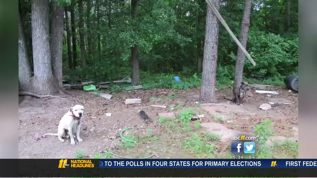 Dogs rescued in Franklin County