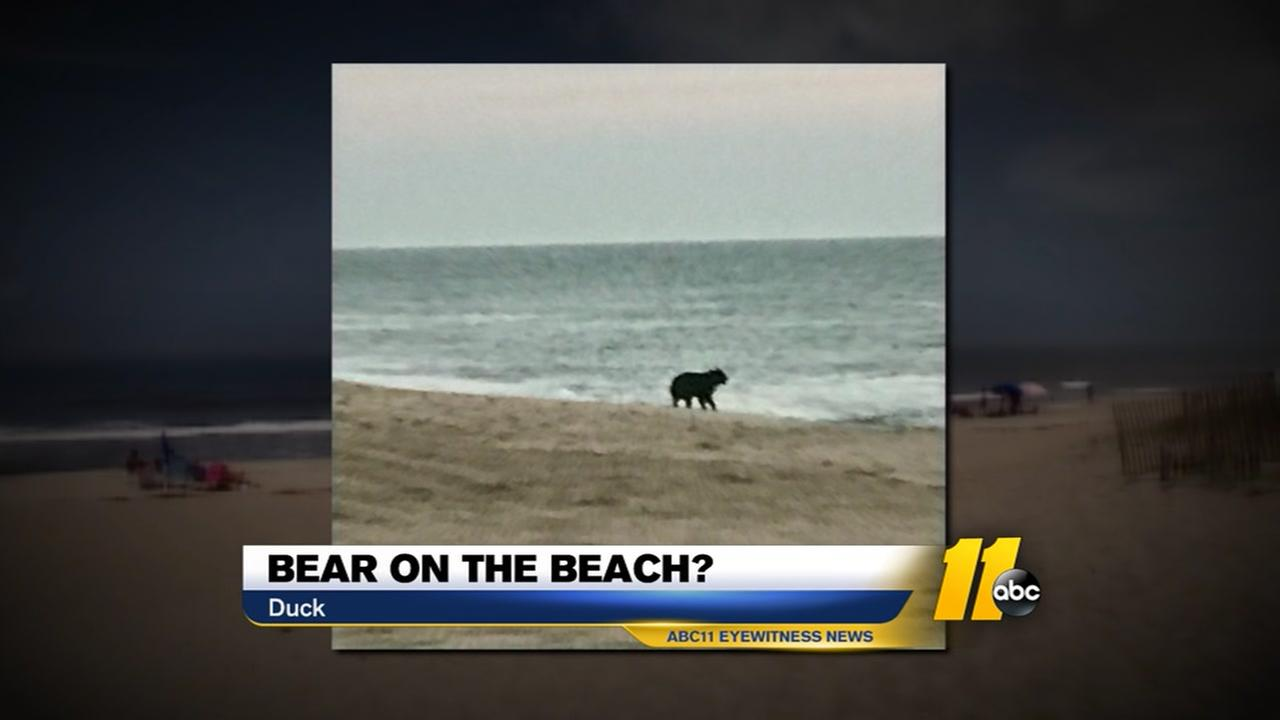 Black bear spotted on OBX beach