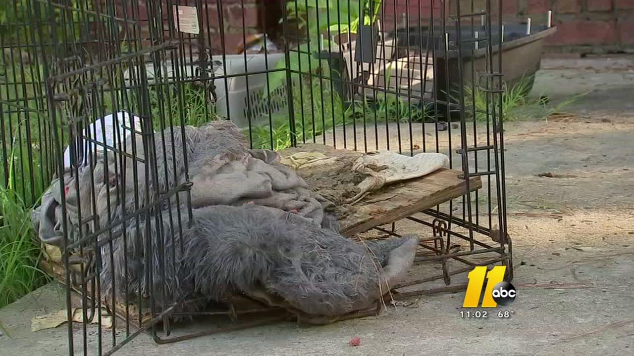 Four dogs left in die in Clayton