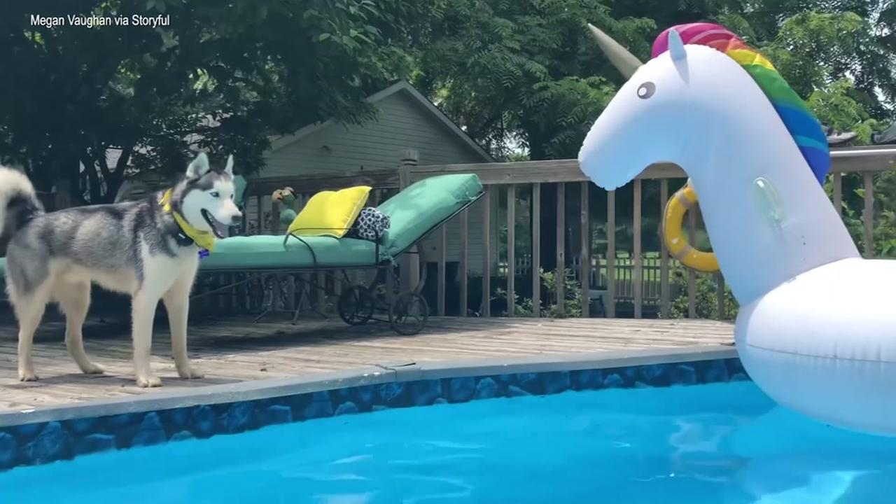 Floating Unicorn Taunts Dog