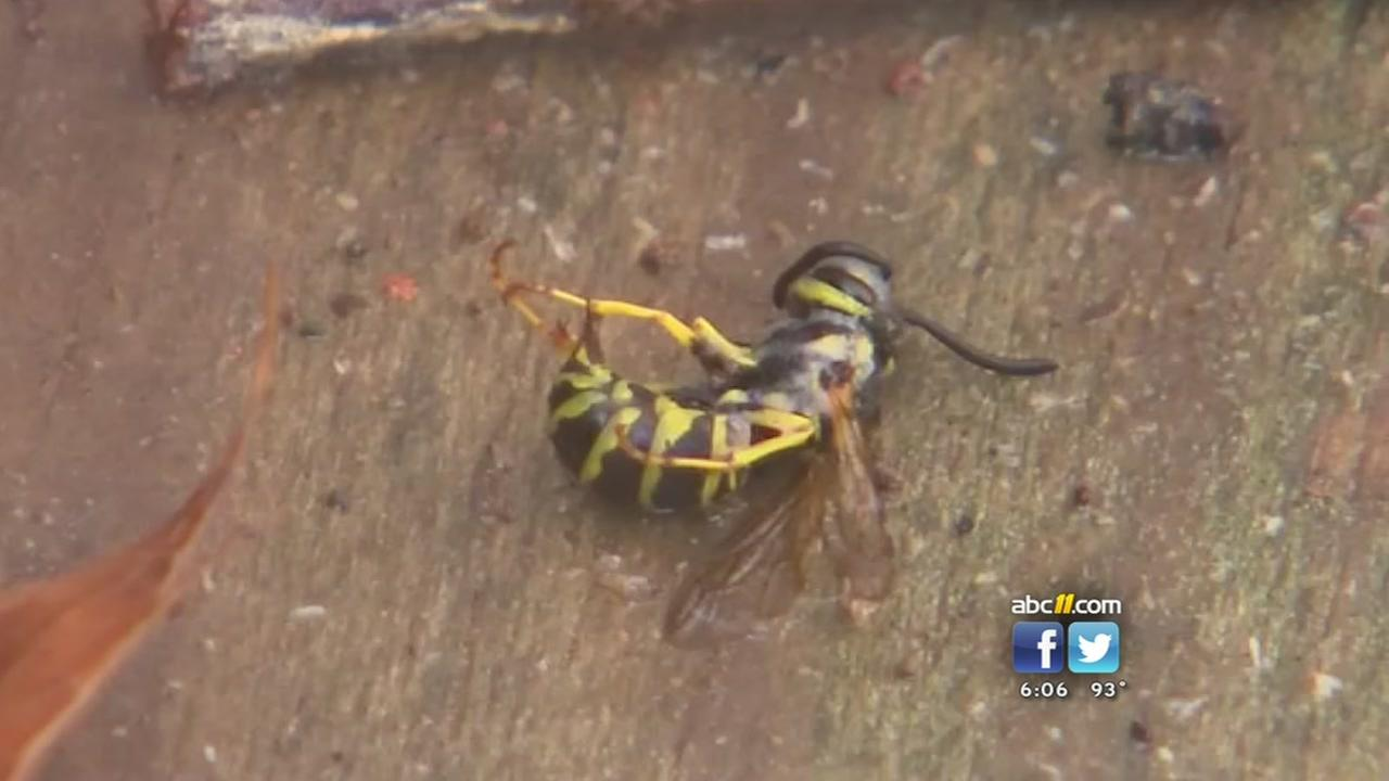 Man critical after being stung by yellow jackets