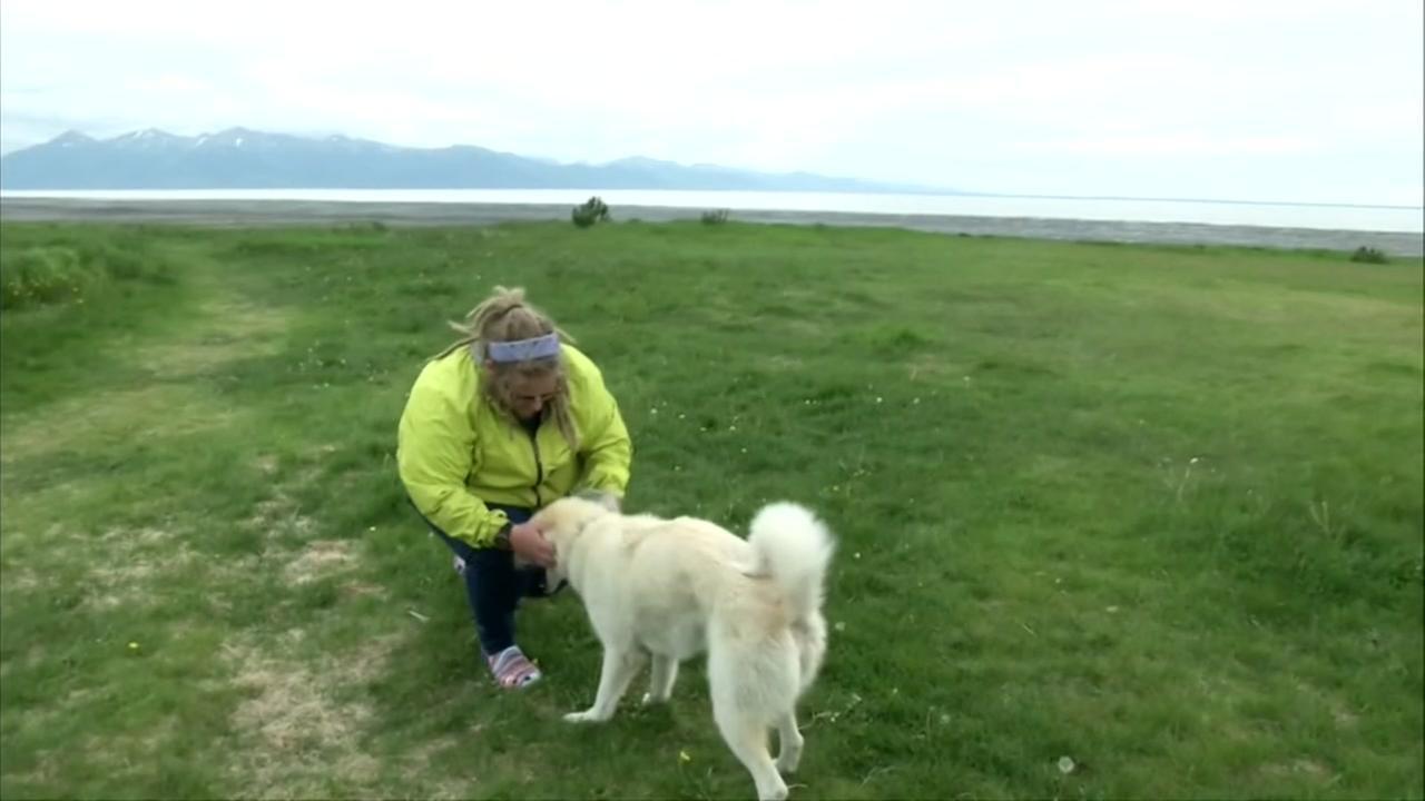 Guide dog wandering Alaskan trail saves life of injured hiker