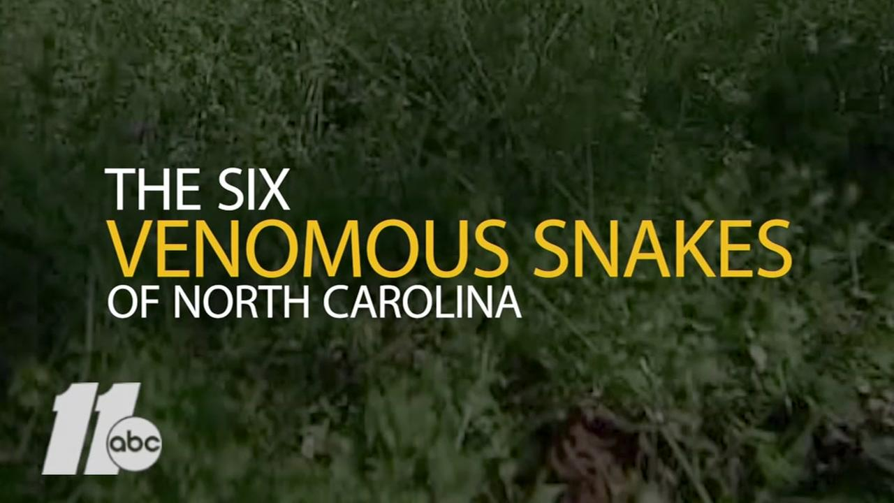The six venomous snakes of North Carolina
