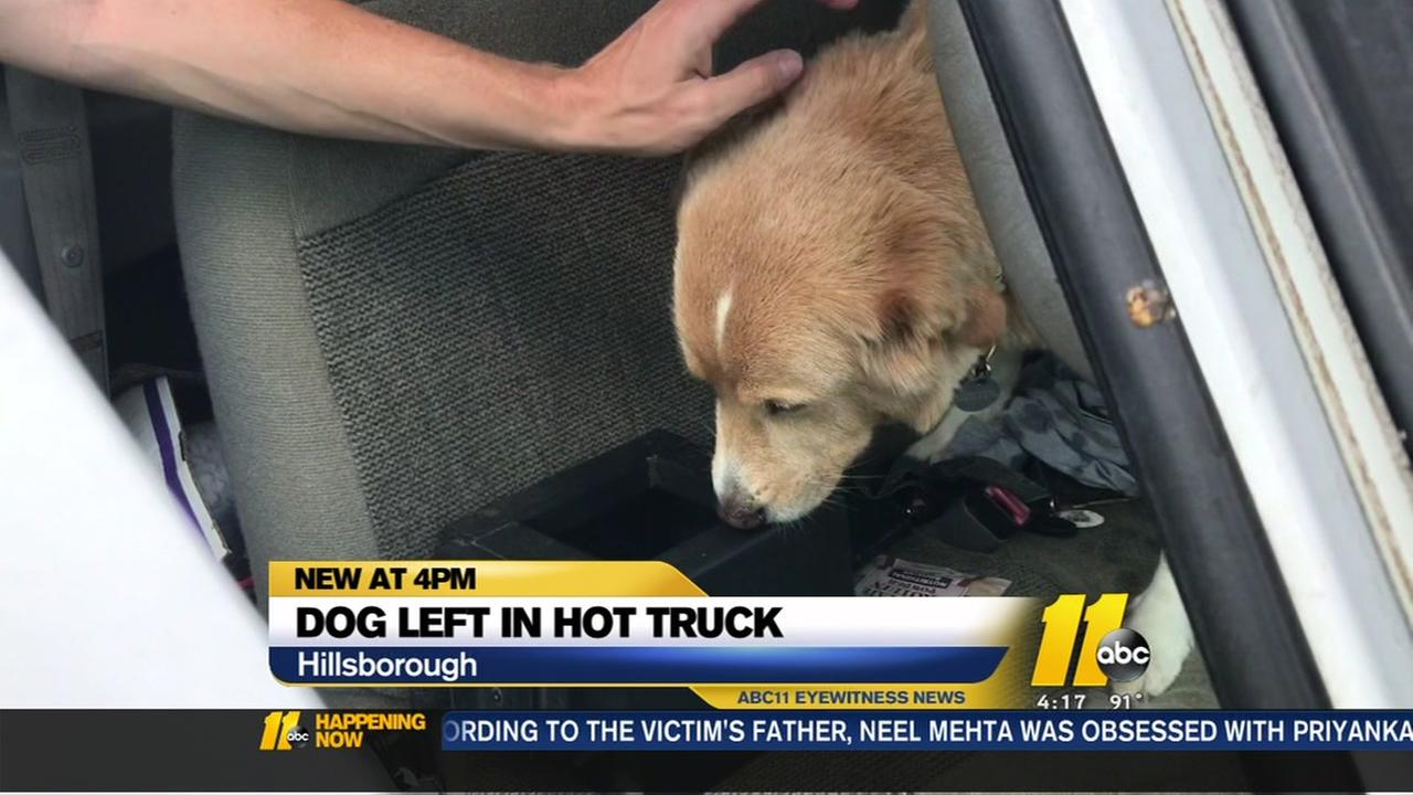 Dog left in hot truck in Hillsborough