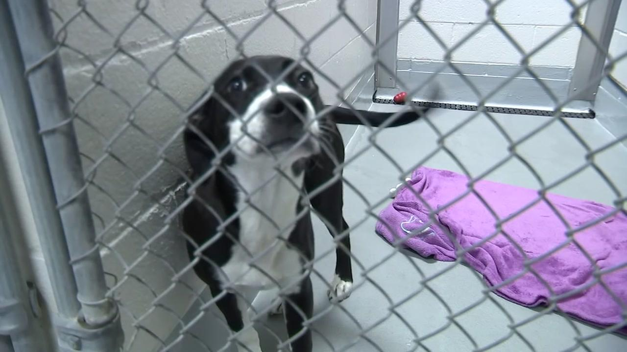 Wake County Animal Shelter almost full