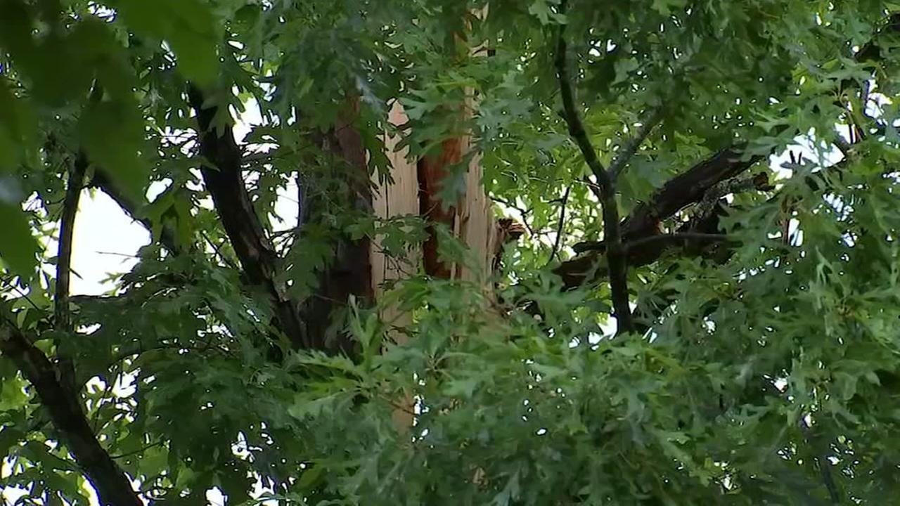 Man, tree struck by lightning in Durham