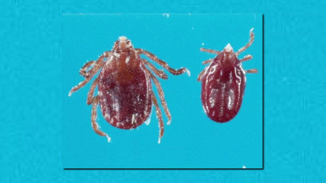 New species of tick is found in