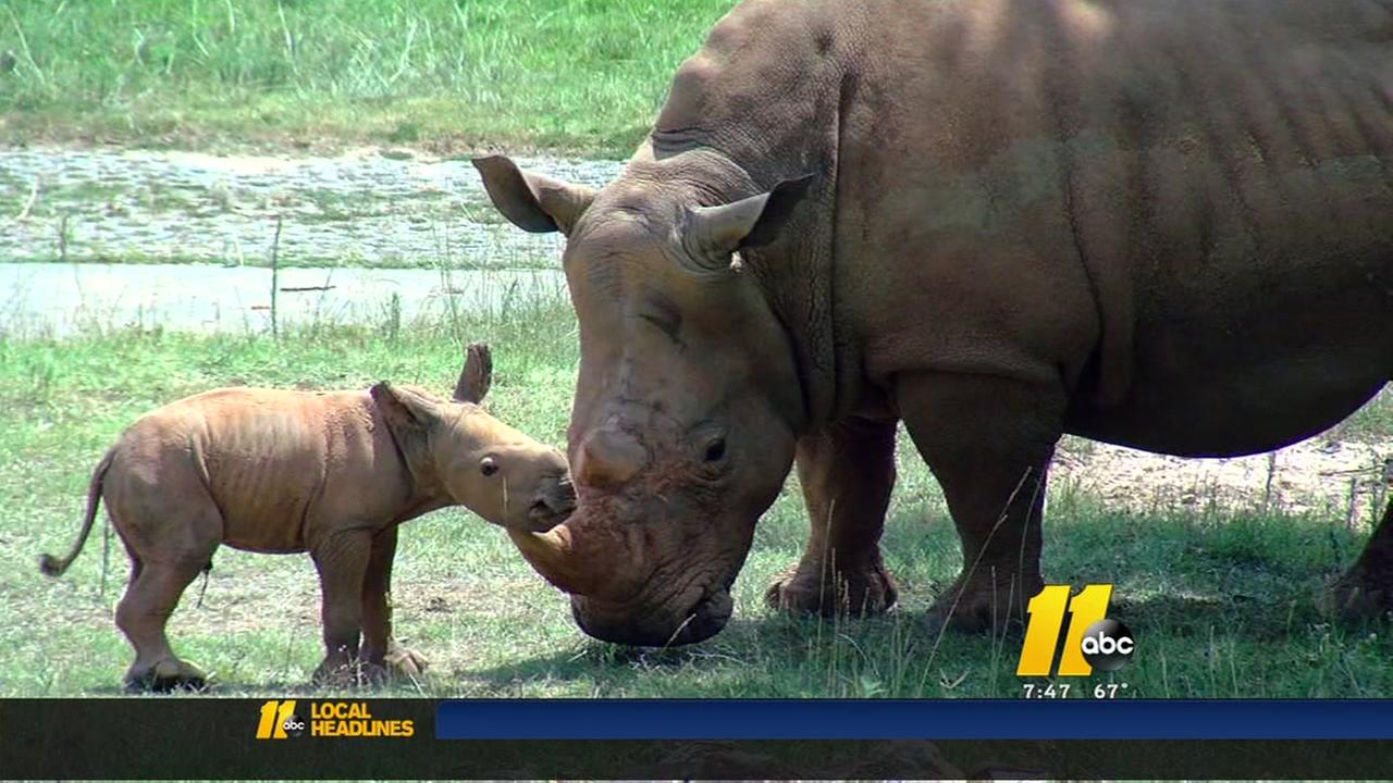 NC Zoo announces birth of rhino