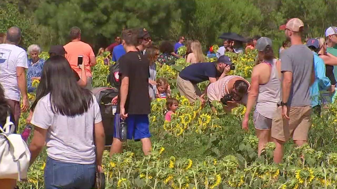 SunFest draws large crowds to Dorothea Dix Park