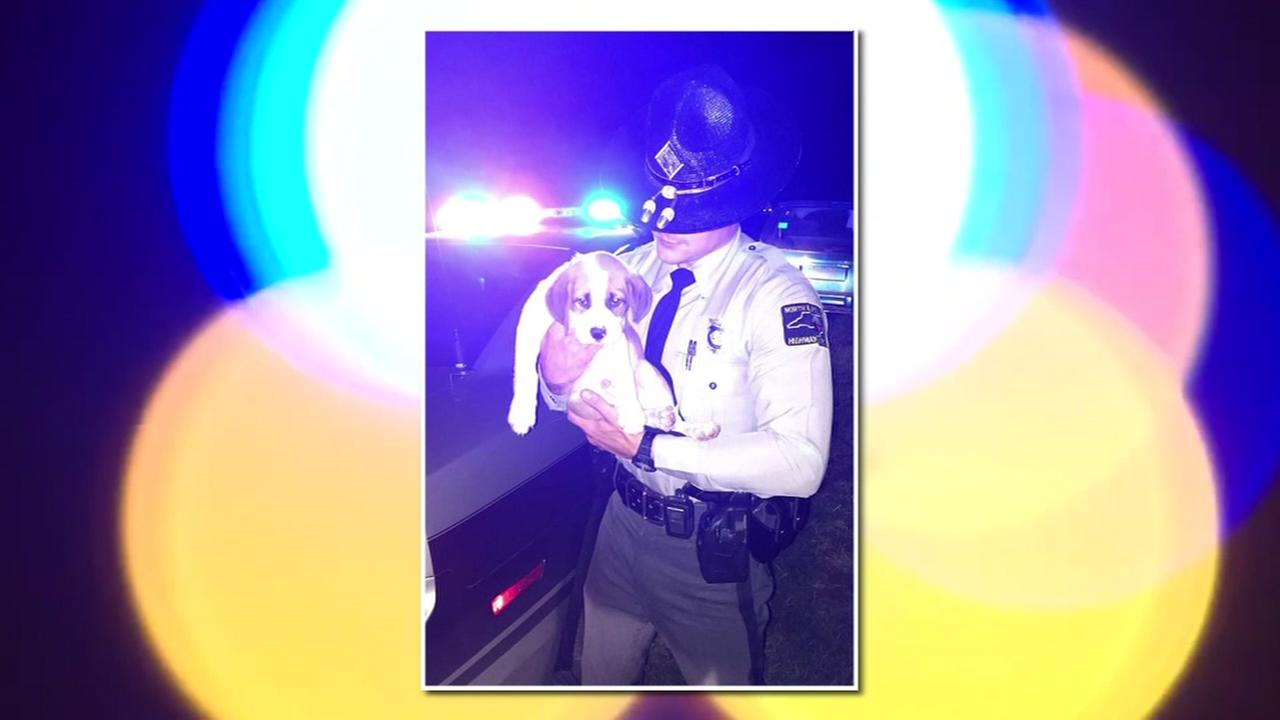 NC state trooper saves puppy from impaired driver