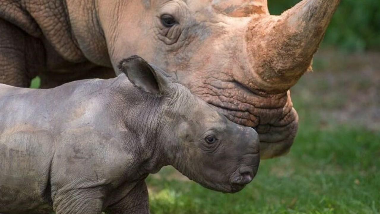 Name that rhino