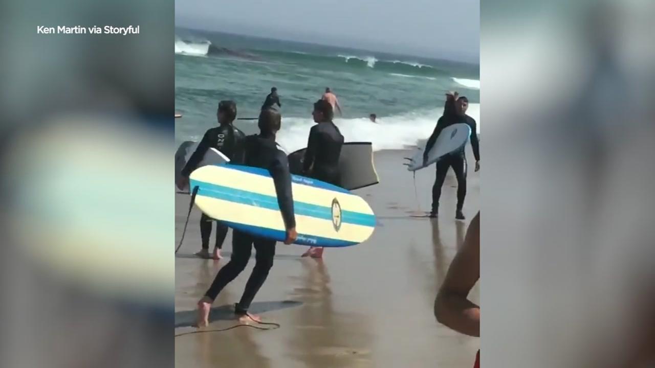Swimmers, surfers flee water as shark attacks seal