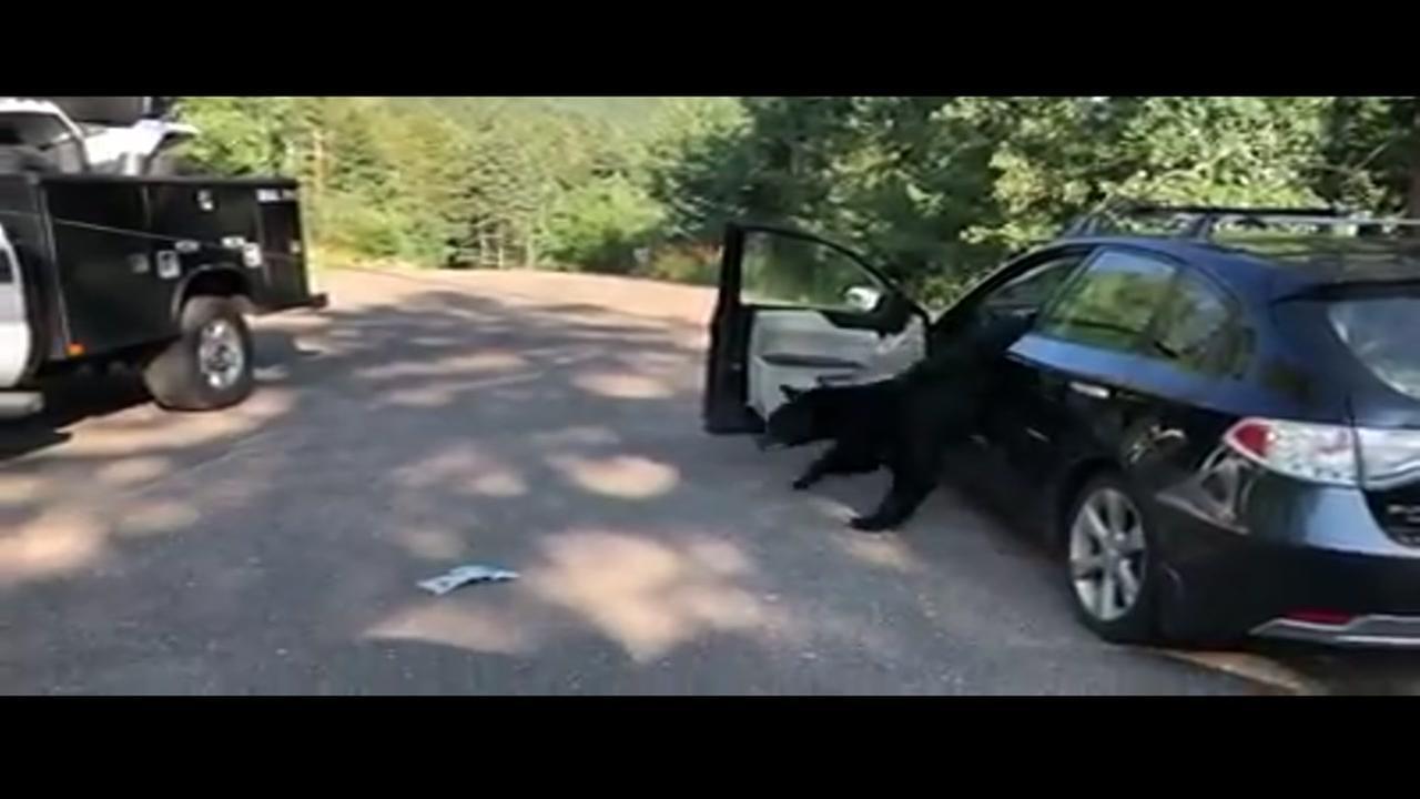 Bear locked in car makes mess of interior