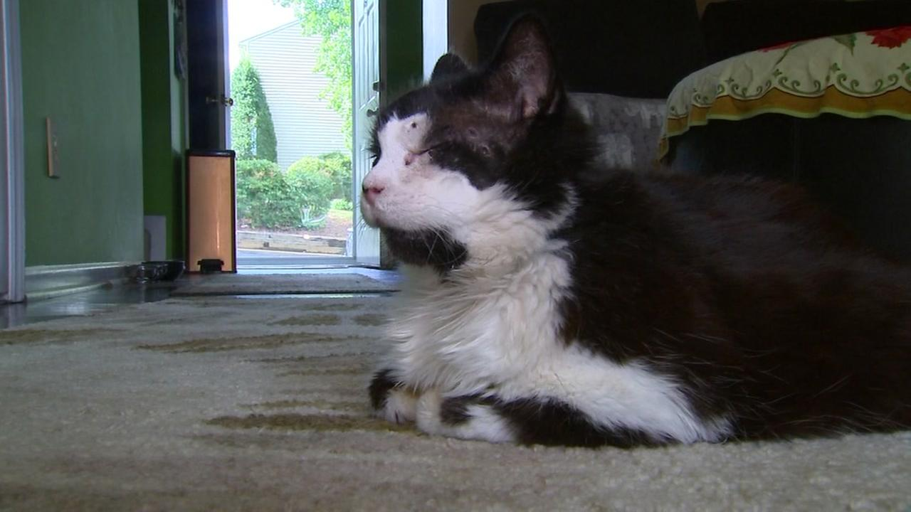 Durham cat recovering after being shot with BB gun
