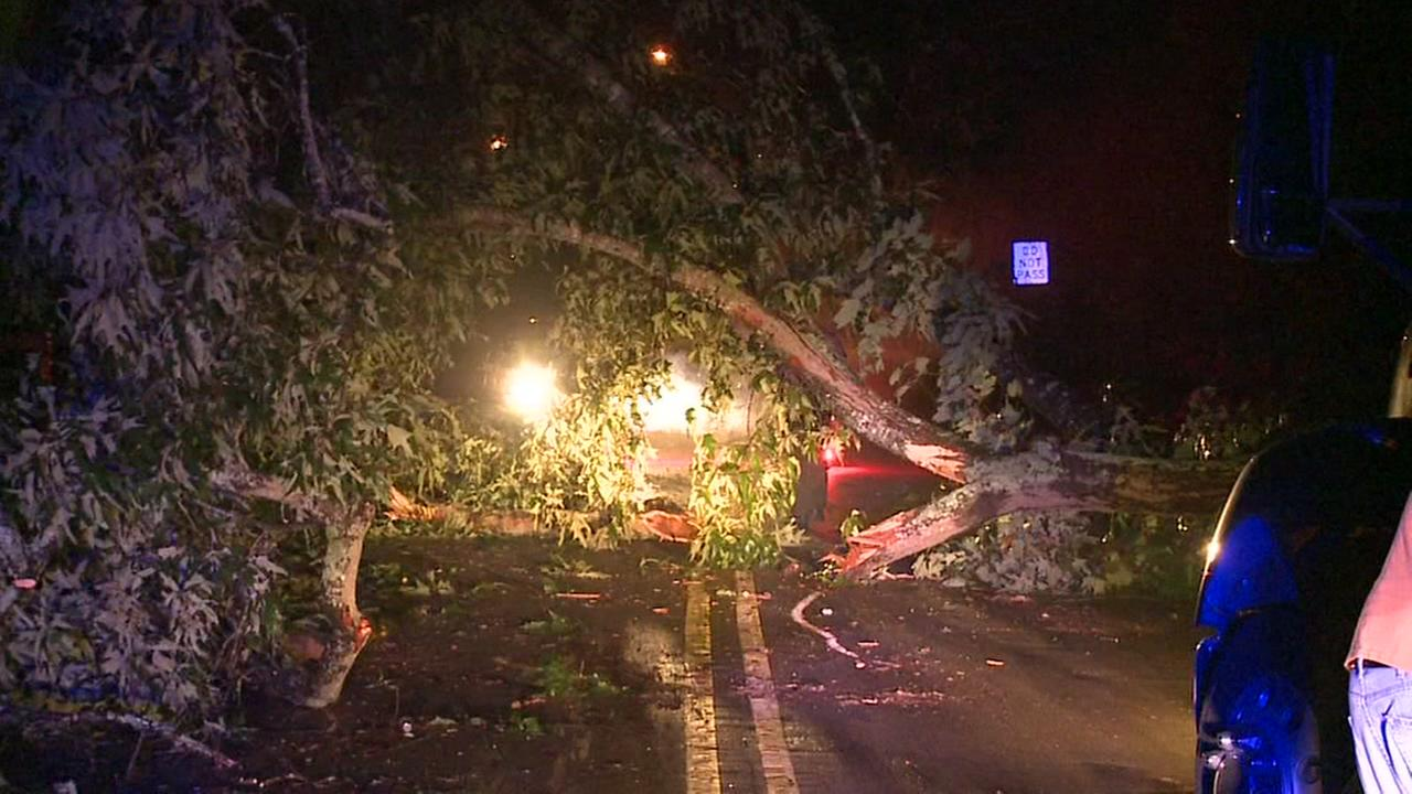 Tree hits wrecker, causes mess on Cornwallis Road