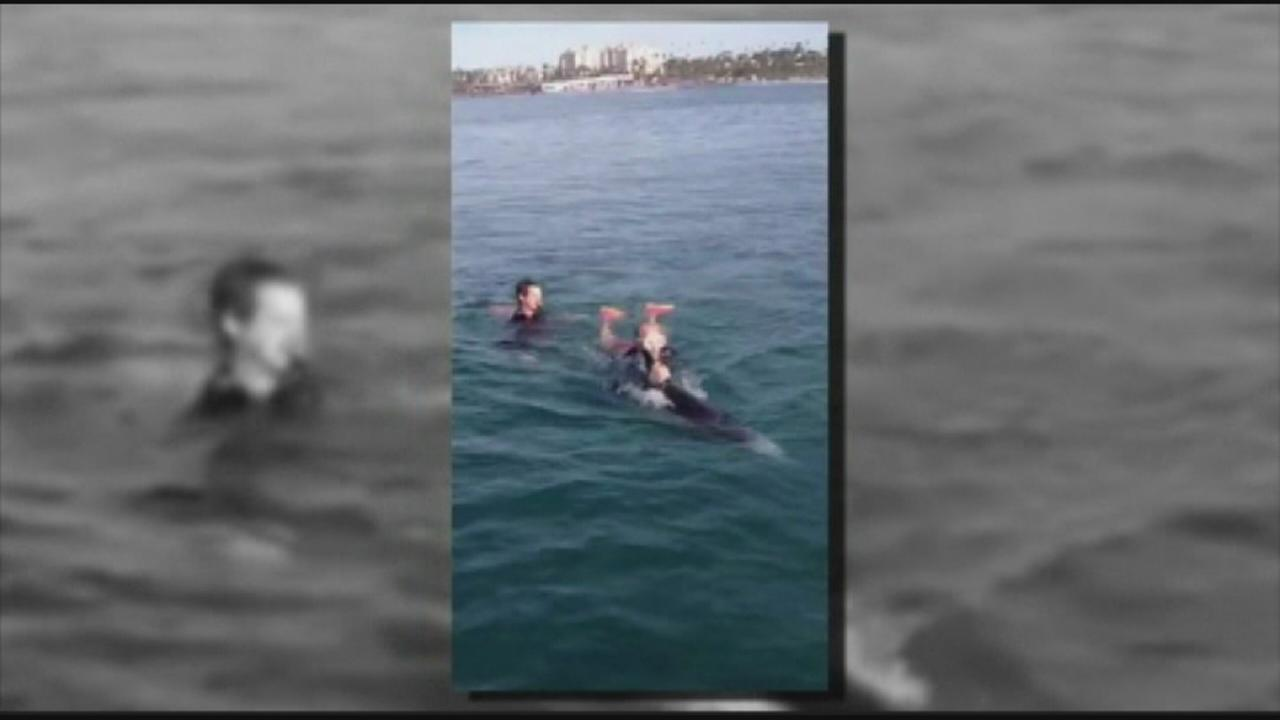 Tangled dolphin rescued