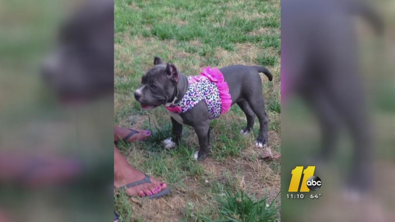 Reward offered for stolen Durham puppy