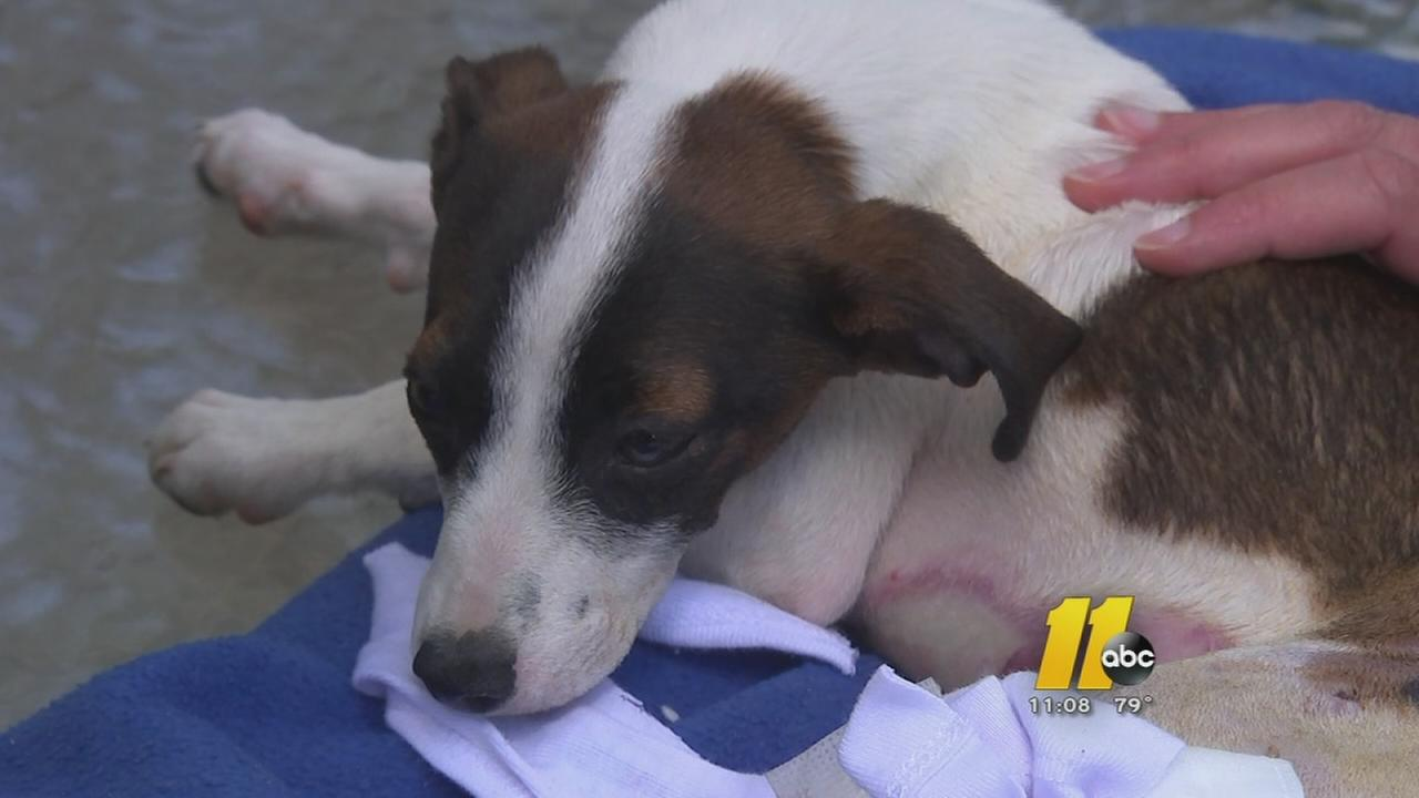 Dog set on fire in Cumberland County