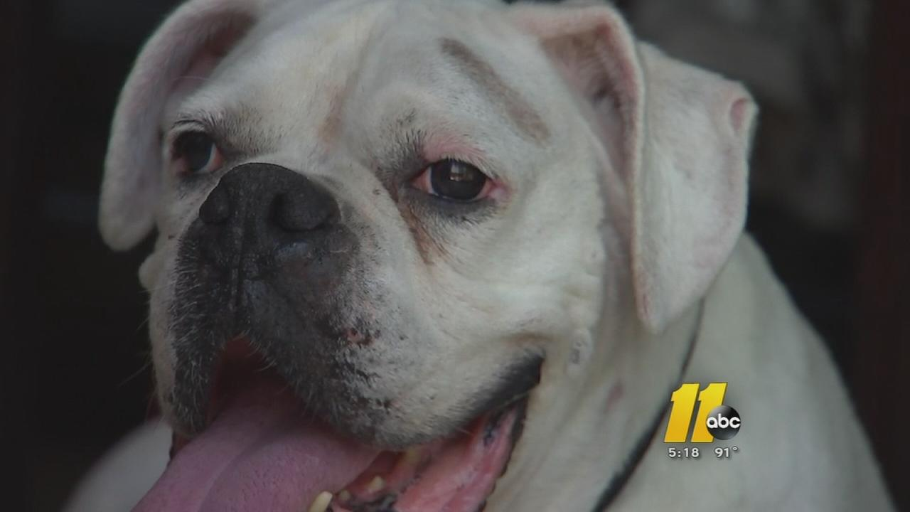 Missing dog found years later in Cumberland County.