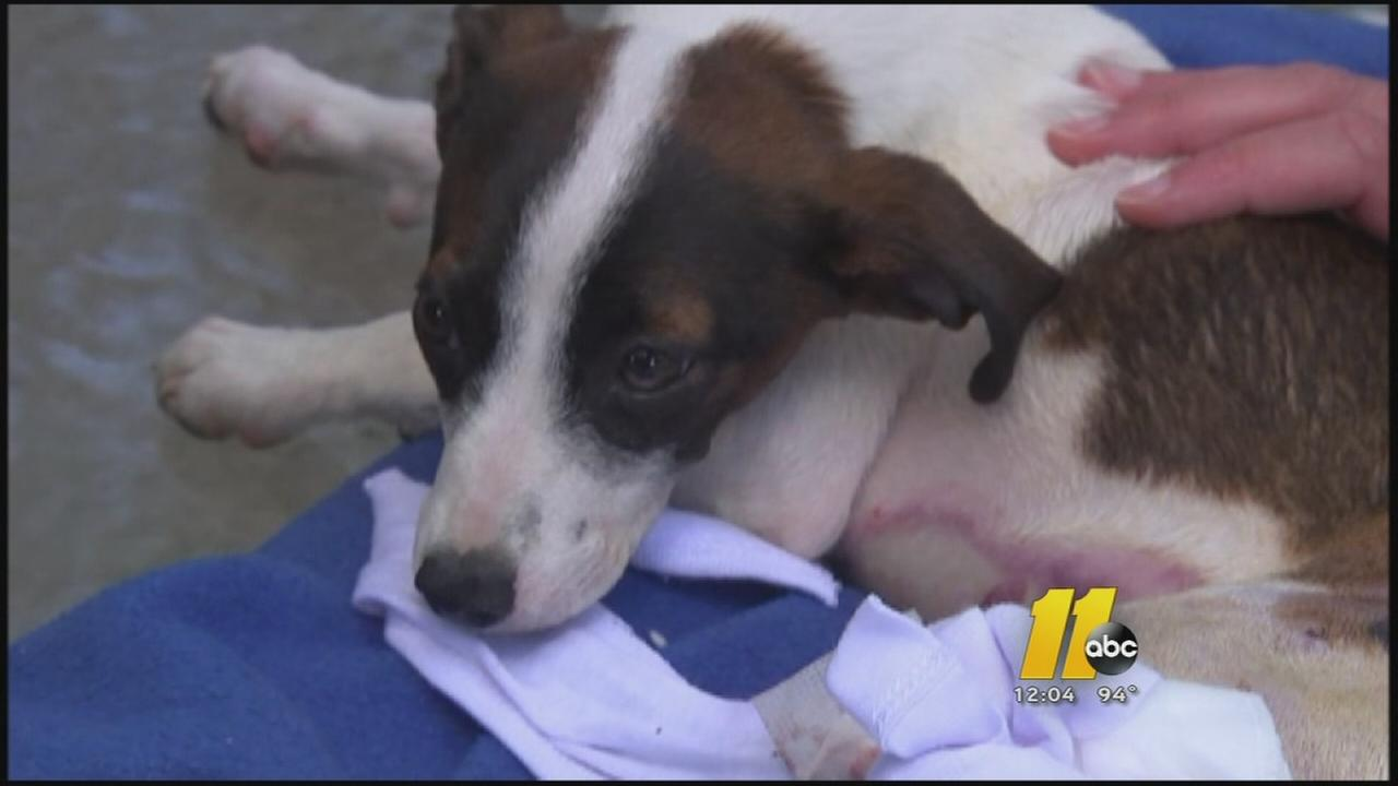 Fayetteville dog set on fire euthanized due to injuries
