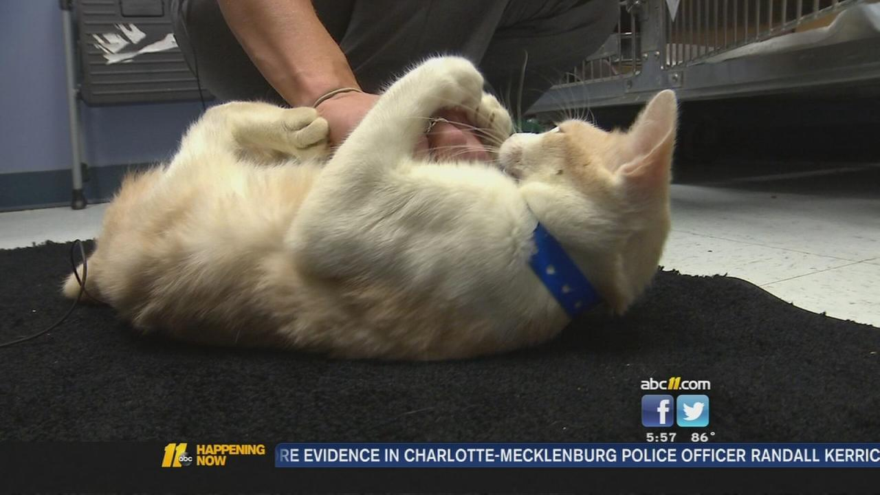 Cats rescued from farm adoptable