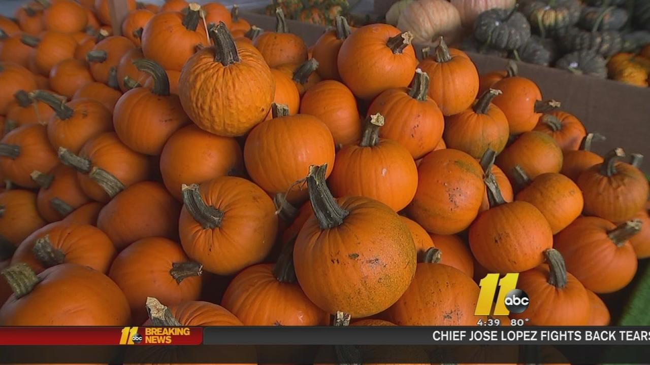Pumpkin season is here