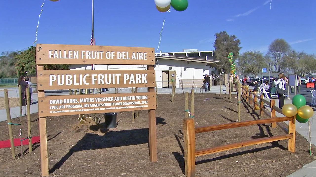The Fallen Fruit of Del Aire Public Fruit Park is seen during its public opening in Hawthorne, Calif., on Saturday, Jan. 5, 2013. It is the states first public fruit park.