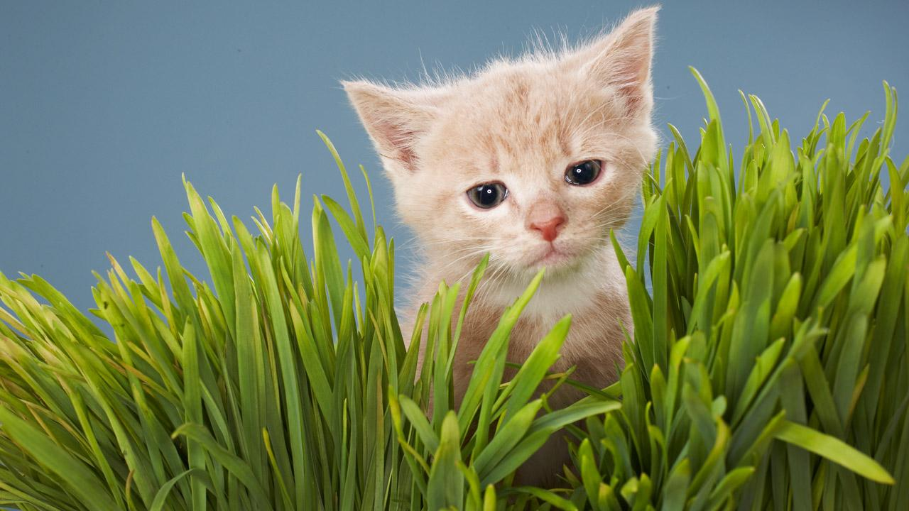 A kitten is shown in this undated file image.